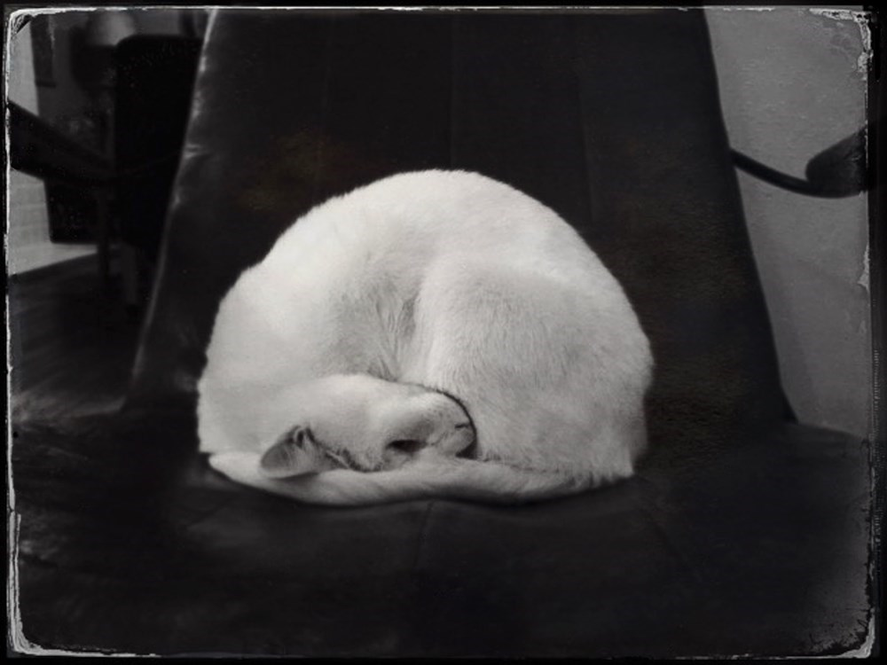 TheCreativeNet - Midcentury Kitty on the Red Chair, 2015Photography by Sue Abramson  Midcentury Kitty on the Red Chair, 2015 Photography by Sue Abramson